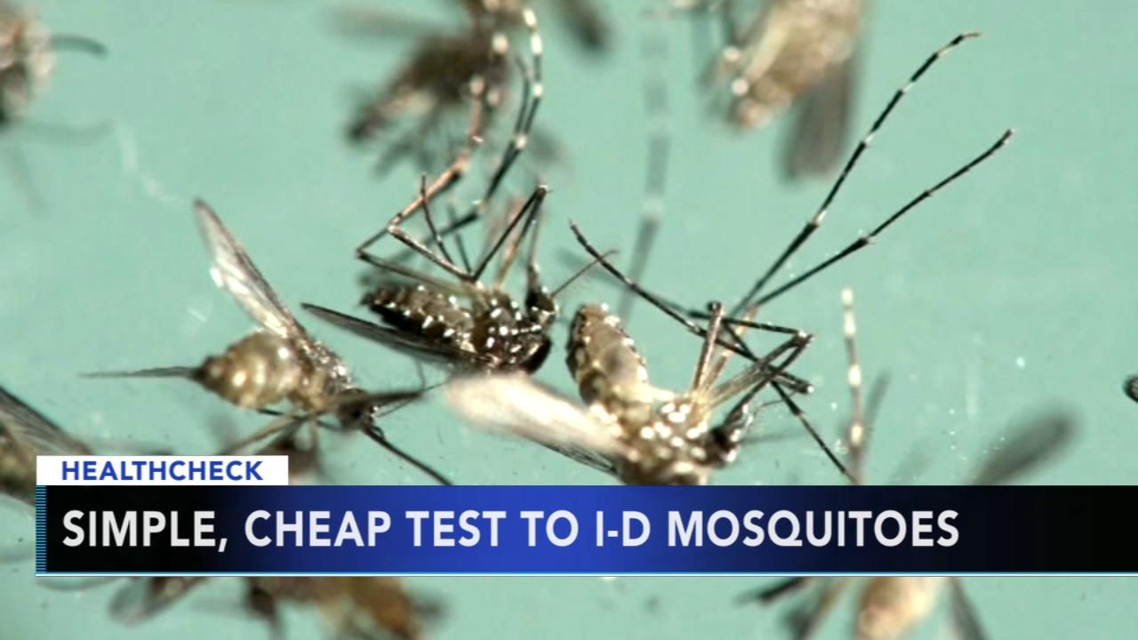 New test can detect potential disease-carrying mosquitoes: Ali Gorman reports during Action News at 5pm on August 31 ,2018.
