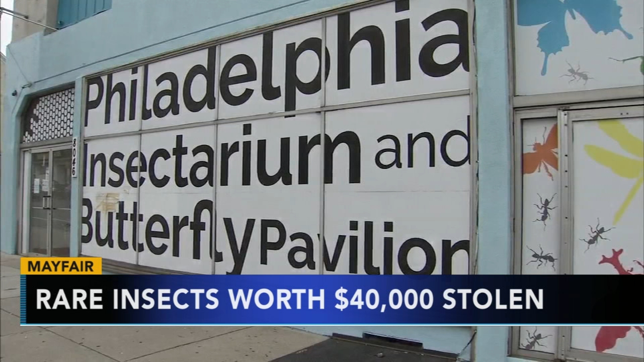 Philadelphia police: Thieves stole $40,000 in rare insects, reptiles. Watch this report from Action News at 5pm on August 31, 2018.