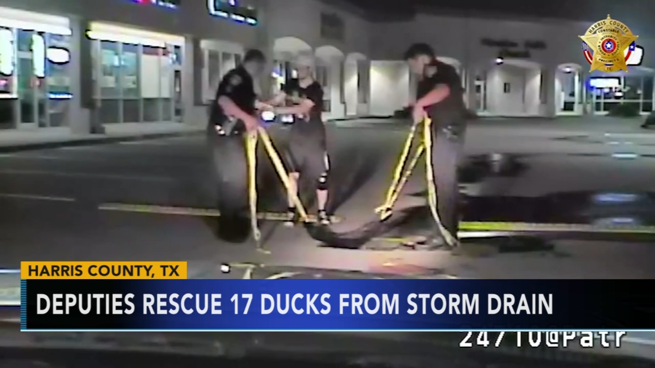 Quick-thinking Texas deputies save ducklings from storm drain. Gray Hall reports during Action News at 7 a.m. on September 8, 2018.