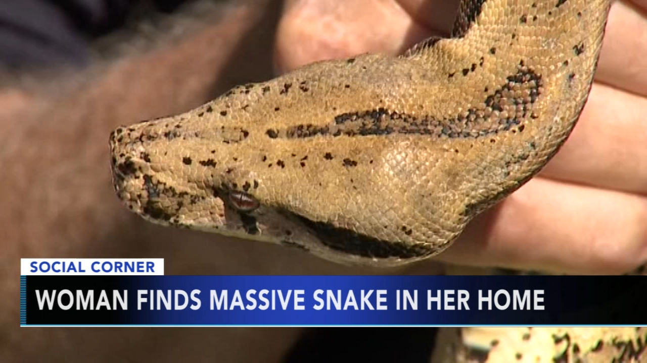 Milwaukee woman finds snake in her living room. Gray Hall reports during Action News at 10 a.m. on September 9, 2018.