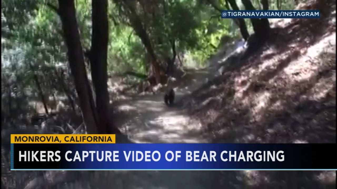 Bear charges at family hiking in California. Tamala Edwards reports during Action News at 4 a.m. on September 11, 2018.