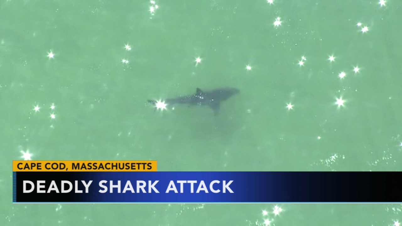Police: Man dies after shark attack off Cape Cod. Christie Ileto reports during Action News at 6 a.m. on September 16, 2018.