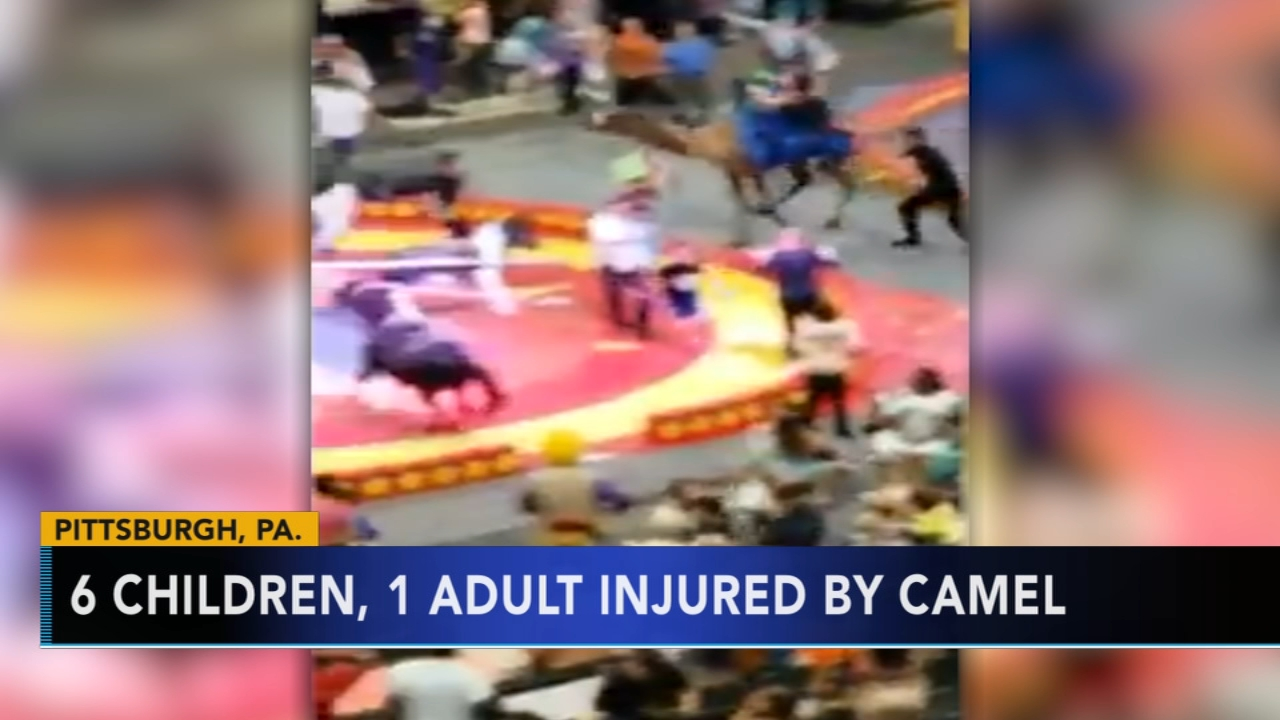 7 injured when startled camel bucks at Pittsburgh circus. Matt ODonnell reports during Action News Mornings on September 17, 2018.