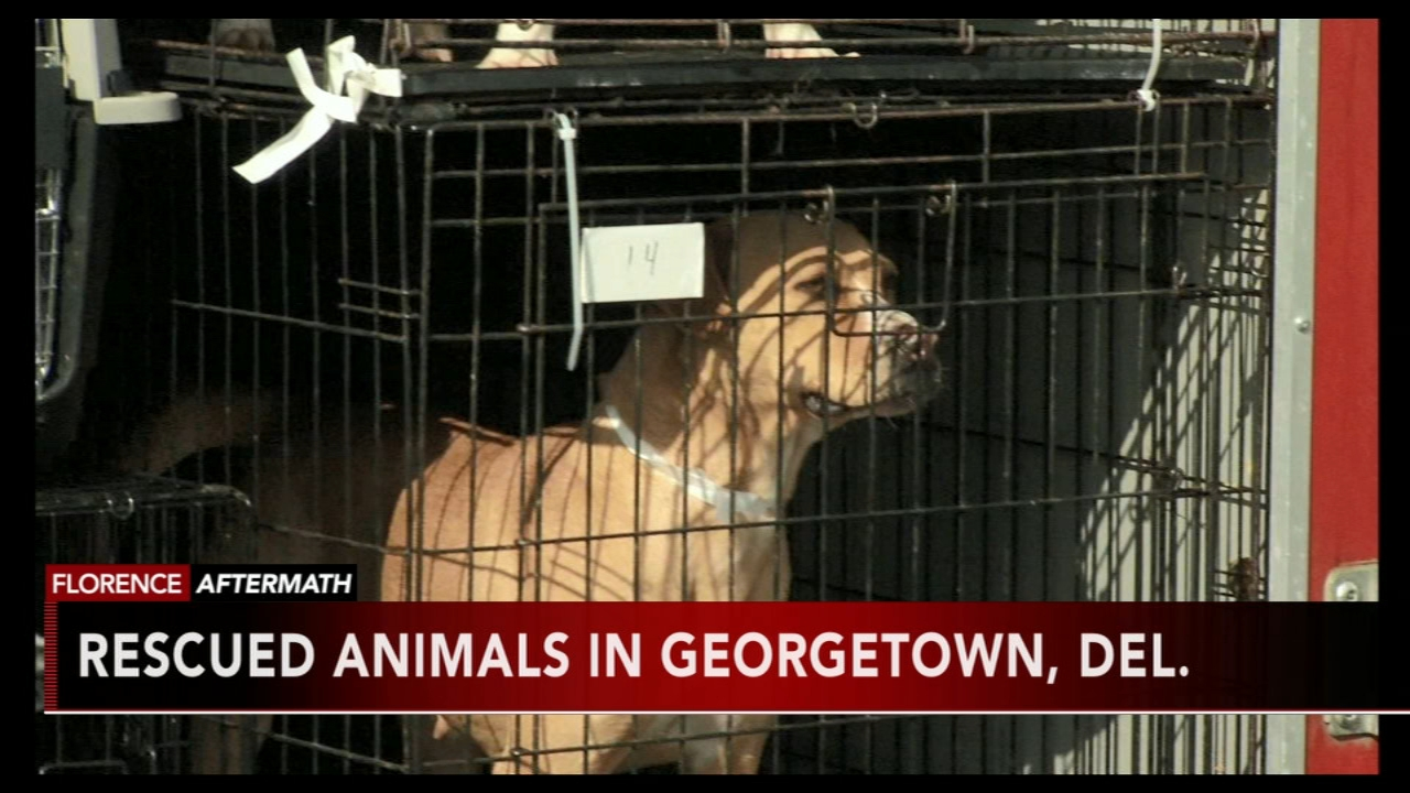 Animals rescued from the floods in North Carolina iin Delaware as reported during Action News at 11 on September 18, 2018.