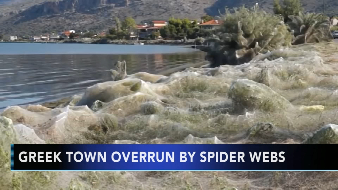 Greek town overrun by spider webs. Alicia Vitarelli reports during Action News at 7 a.m. on September 22, 2018.