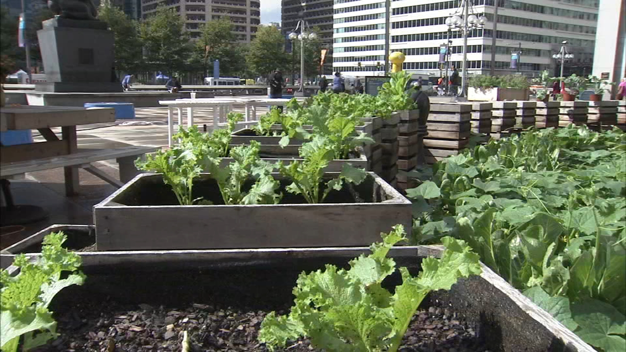 Urban garden near City Hall that feeds homeless facing final harvest. Watch the report from Action News at 4 p.m. on September 26, 2018.