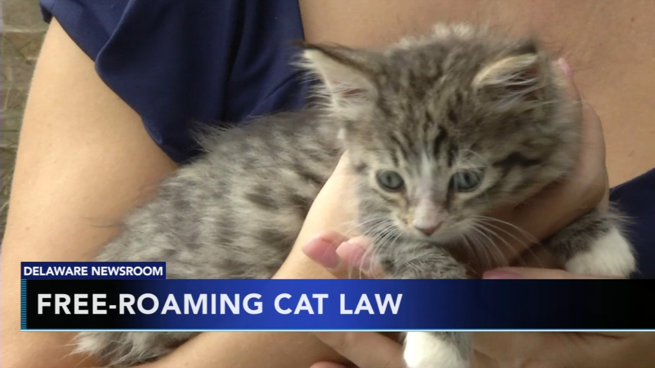 Preventing animal cruelty in Delaware. Matt ODonnell reports during Action News Mornings on October 2, 2018.