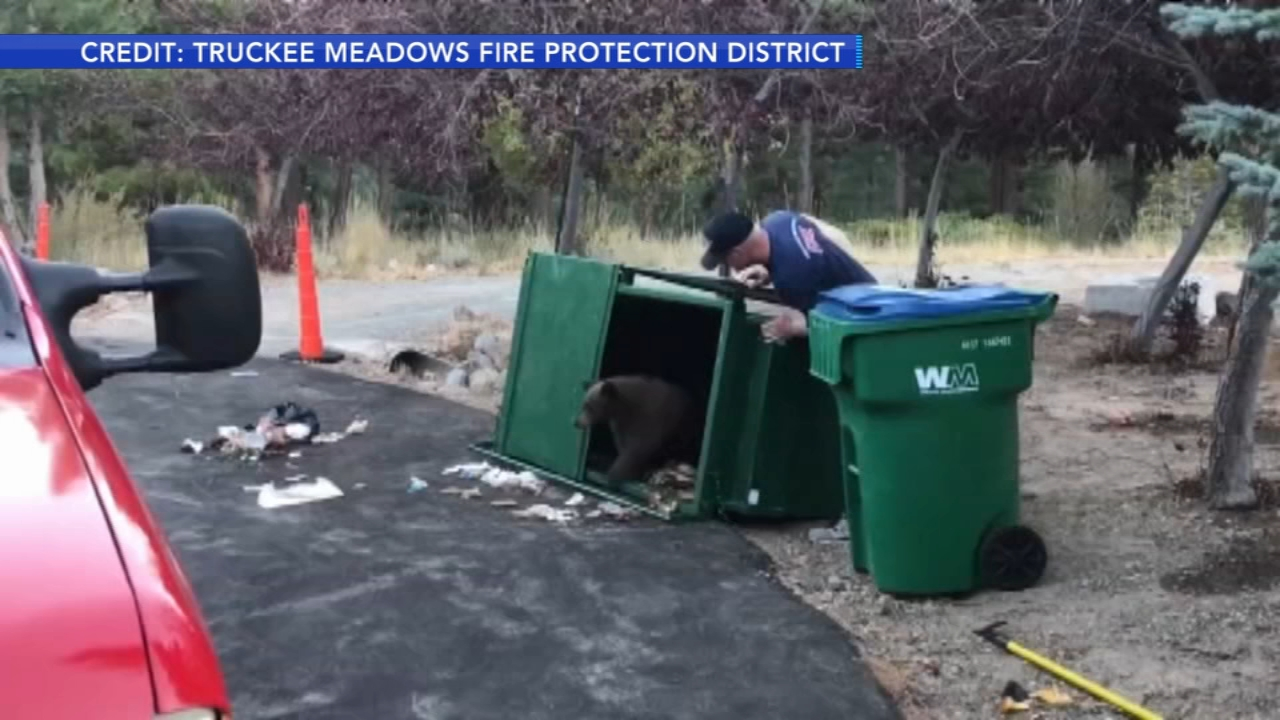 3 bear cubs rescued from dumpster. Matt ODonnell reports during Action News Mornings on October 3, 2018.