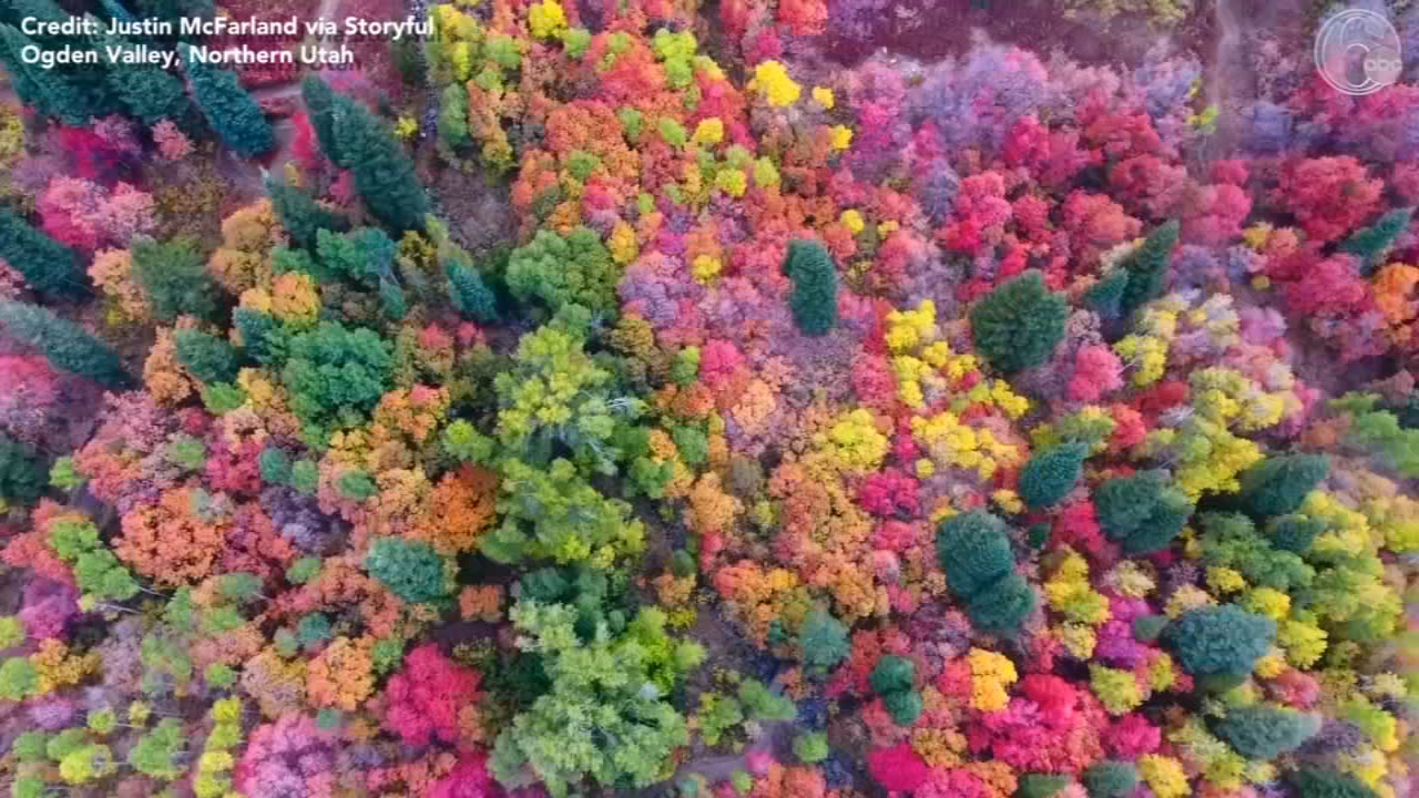 Dazzling display: Colorful foliage ushers in autumn in northern Utah. Watch the video from 6abc.com on October 4, 2018.