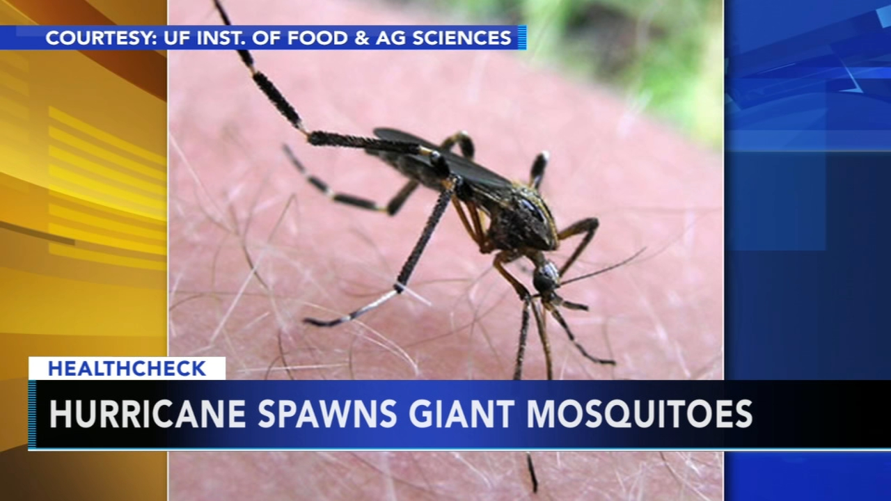 Health officials battling monster mosquitoes in wake of Hurricane Florence - Ali Gorman reports during Action News at 5pm on October 9, 2018.