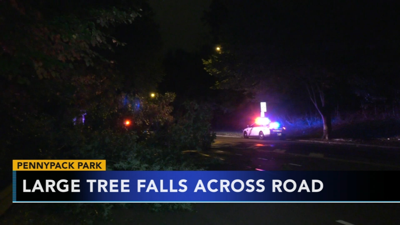 Large tree falls, blocks roadway in Pennypack Park. Gray Hall reports during Action News at 6 a.m. on October 13, 2018.