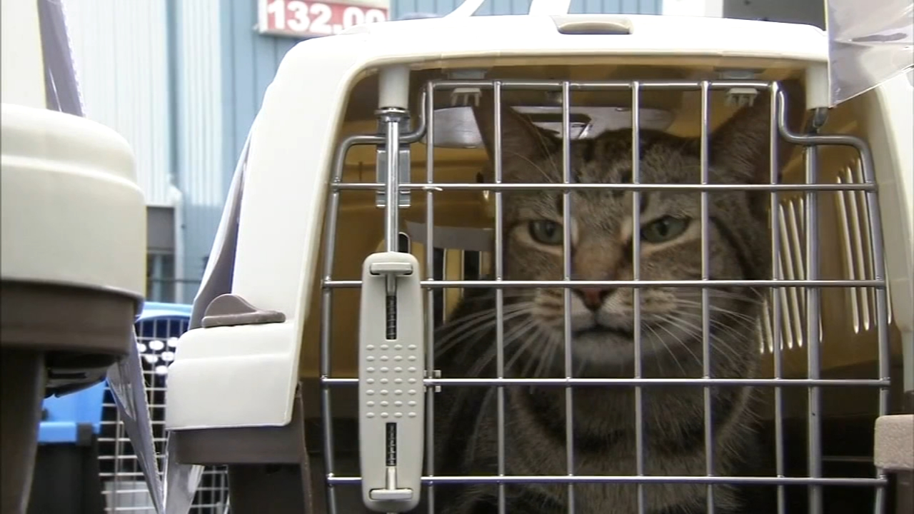 100 cats relocated after Hurricane Michael: John Rawlins reports on Action News at 4 p.m., September 15, 2018
