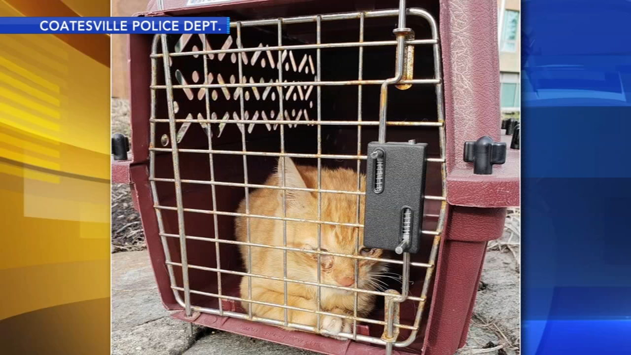 Police rescue kitten from car: As seen on Action News at 5 p.m., October 16, 2018