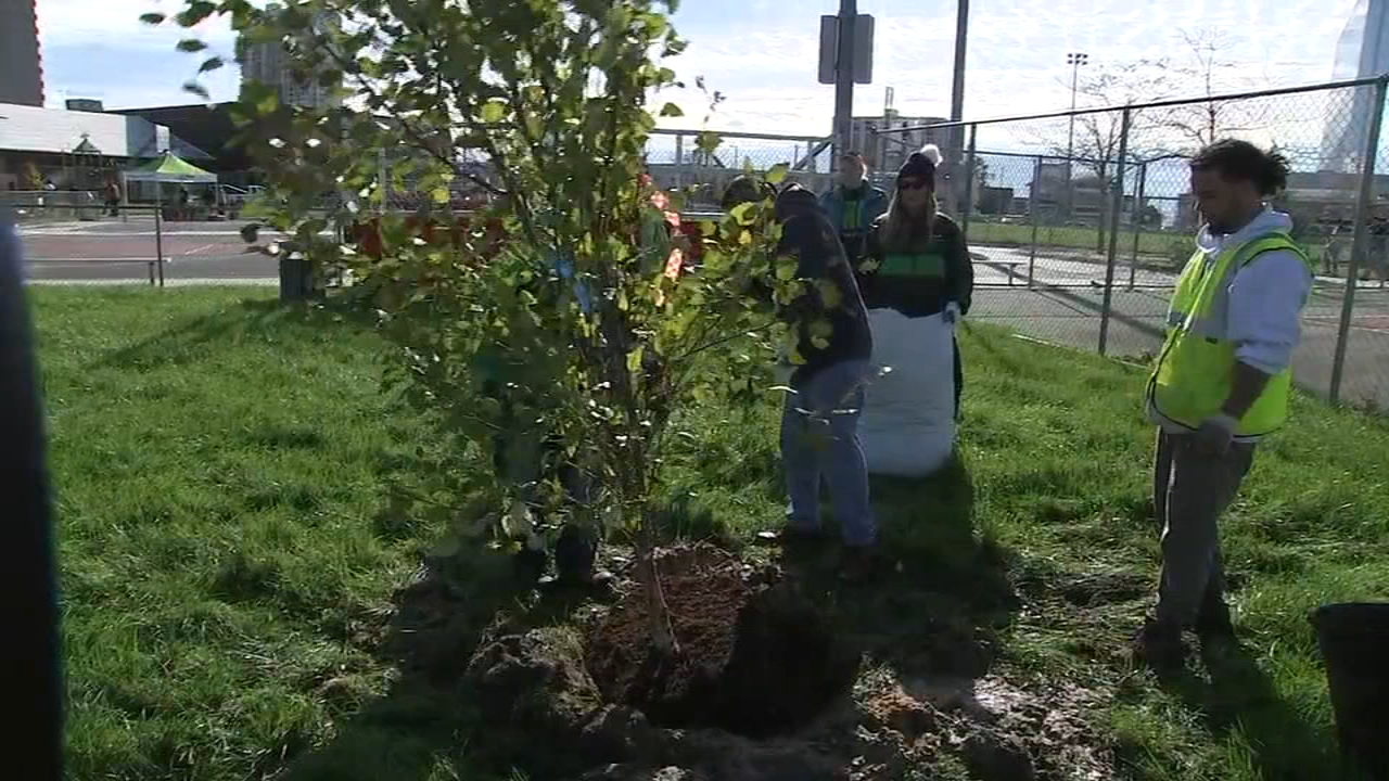 T.D. employees planted 45 trees thanks to the New Jersey Tree Foundationas reported during Action News at 16 on October 16, 20918.