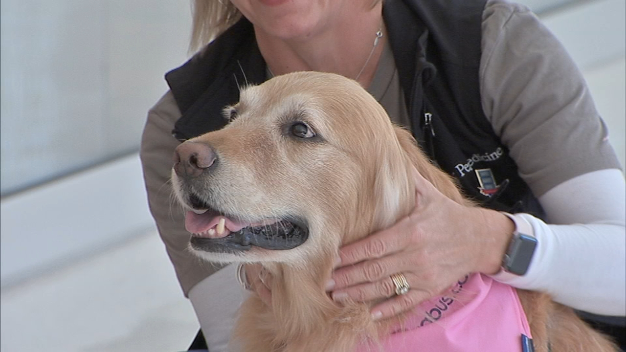 Therapy dogs visit breast cancer patients at Philly hospital. Watch the report from Action News at 4 p.m. on October 16, 2018.
