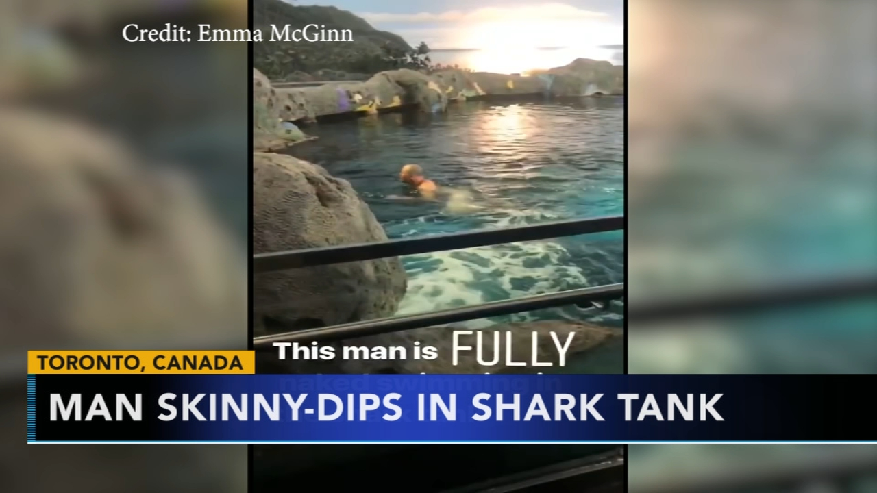 Man skinny dips in shark tank. Tamala Edwards reports during Action News Mornings on October 17, 2018.