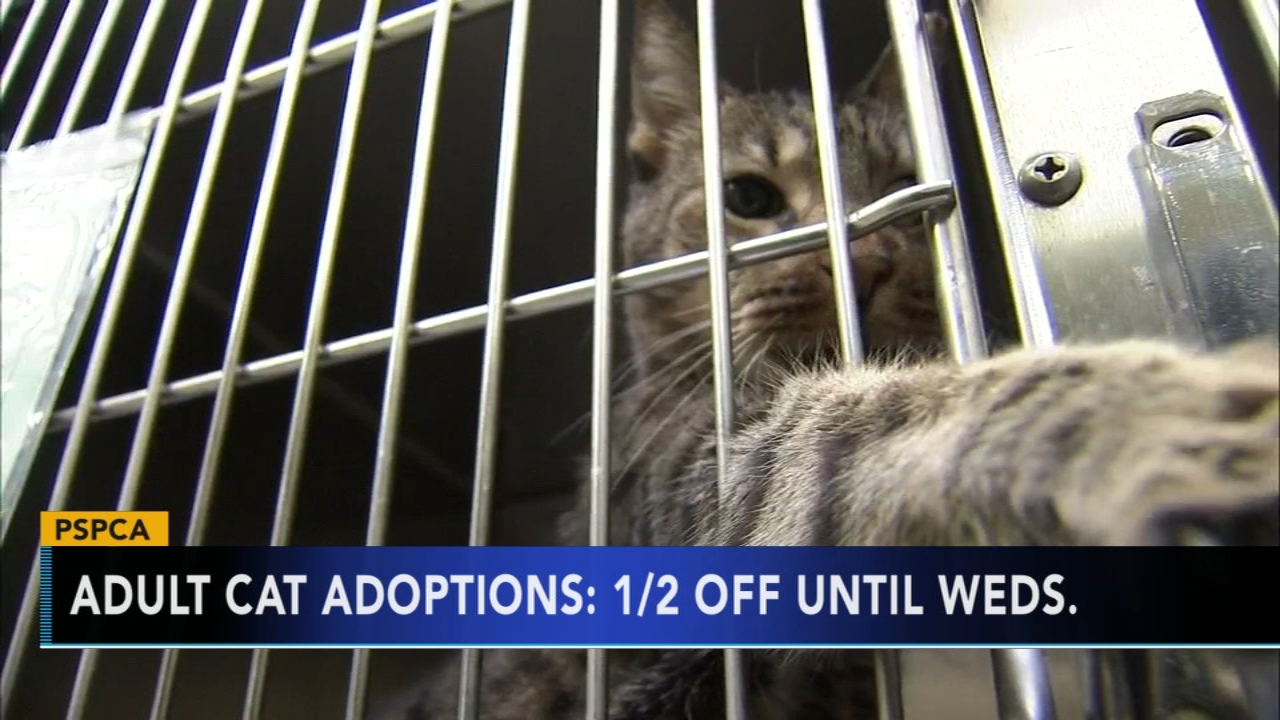 PSPCA offerings half price cat adoptions until Wednesday. Watch the report from Action News at 4:30 p.m. on October 29, 2018.