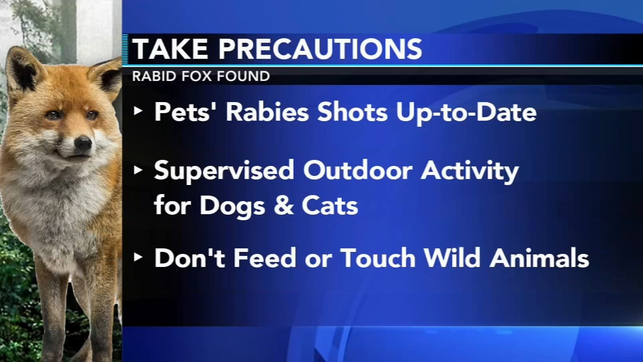 Fox found dead in Villanova tests positive for rabies. Gray Hall reports during Action News at 6pm on October 31, 2018.