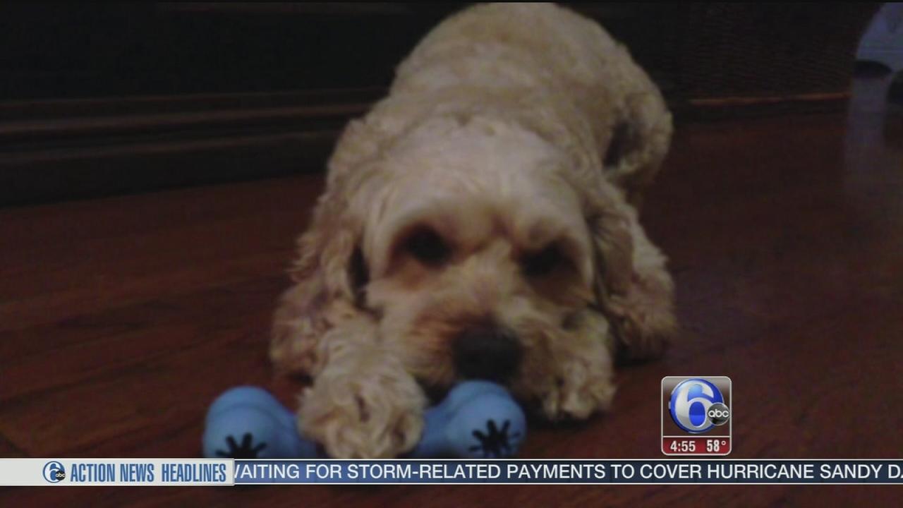 VIDEO: Should you buy pet insurance?