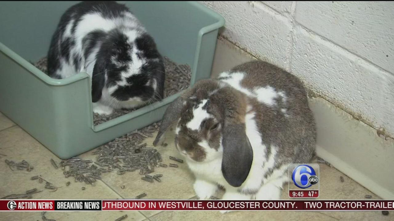 VIDEO: Shelter Me: House Rabbit Society