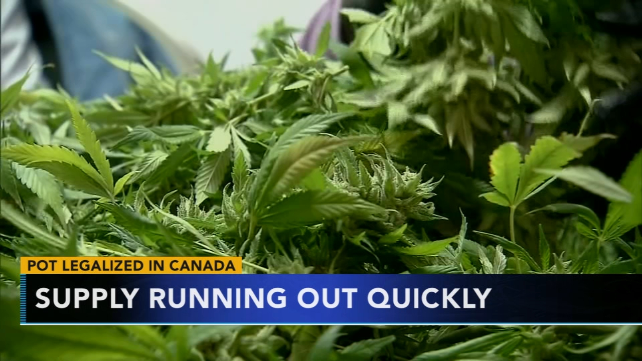 Marijuana supply running out in Canada. Tamala Edwards reports during Action News Mornings on November 1, 2018.