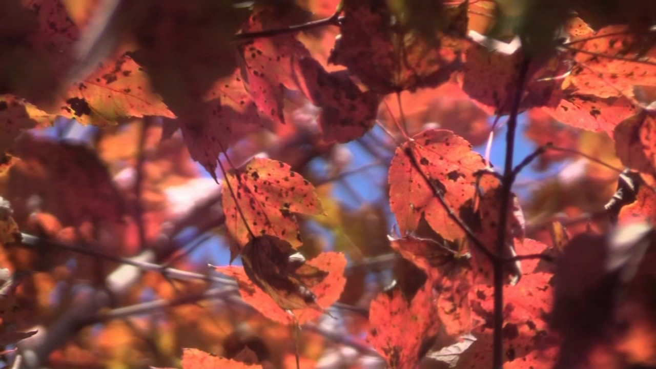 Breathtaking view of fall foliage at French Creek State Park. Trish Hartman reports during Action News at 5:30 p.m. on November 2, 2018.