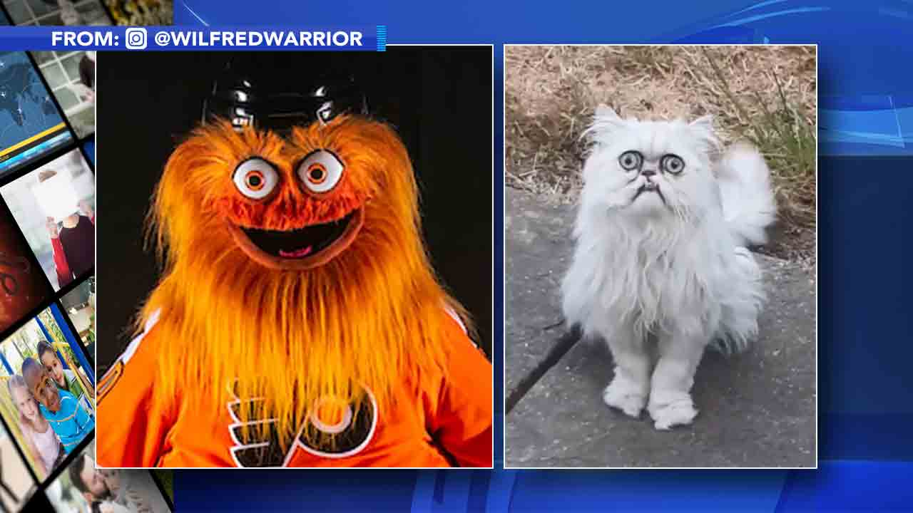Feline Instagram star draws comparisons to Gritty