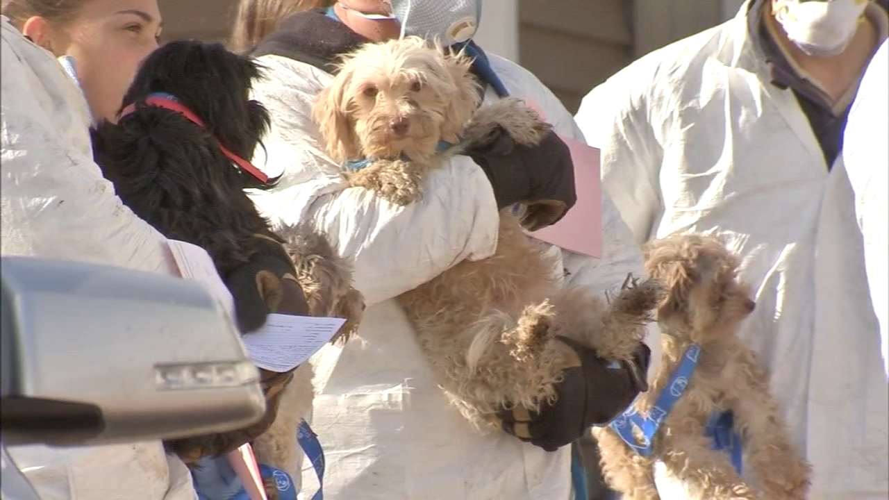 44 dead dogs found in freezers, 161 more living in filthy NJ home. Gray Hall reports during Action News at 5:30p on November 14, 2018.
