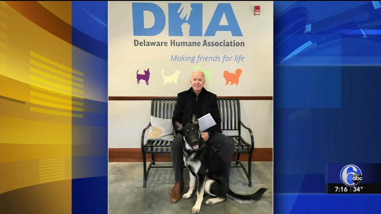 Former VP Joe Biden adopts new furry best friend. Nydia Han reports during Action News at 7 a.m. on November 18, 2018.
