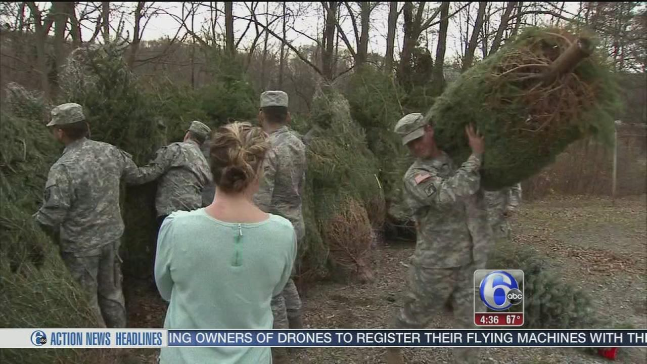 Trees for military families