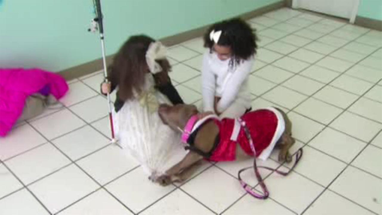 Twins share a special bond with a special needs Pitbull