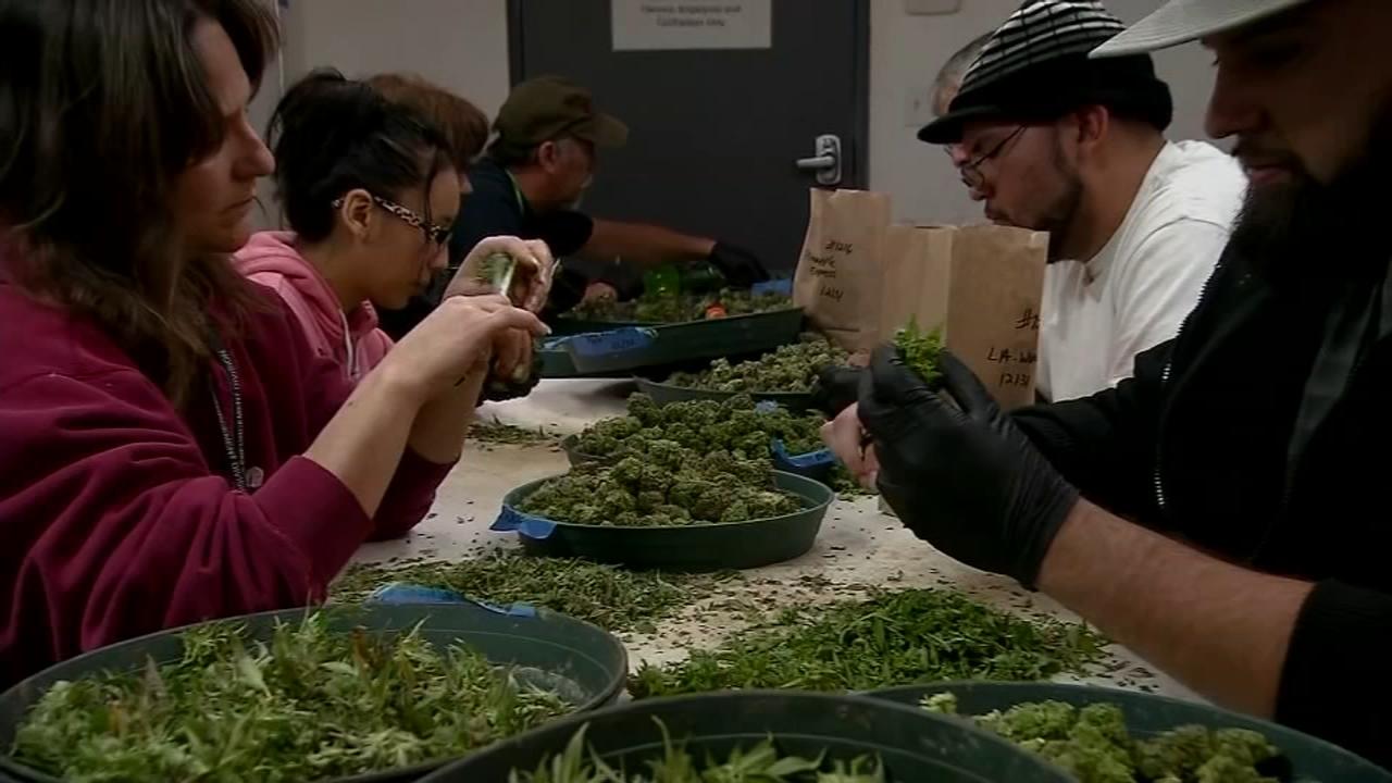 New Jersey Lawmakers consider recreational marijuana: Ali Gorman reports on Action News at 6 p.m., November 26, 2018