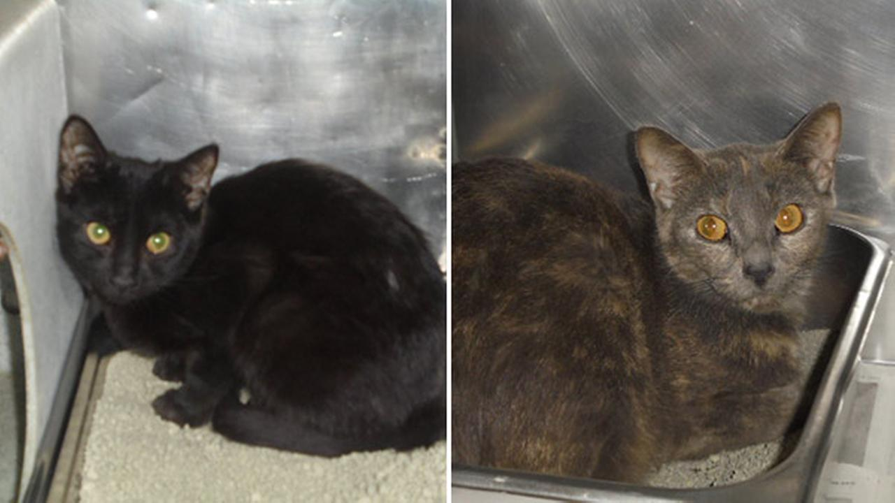 73 cats in need of a home after rescue