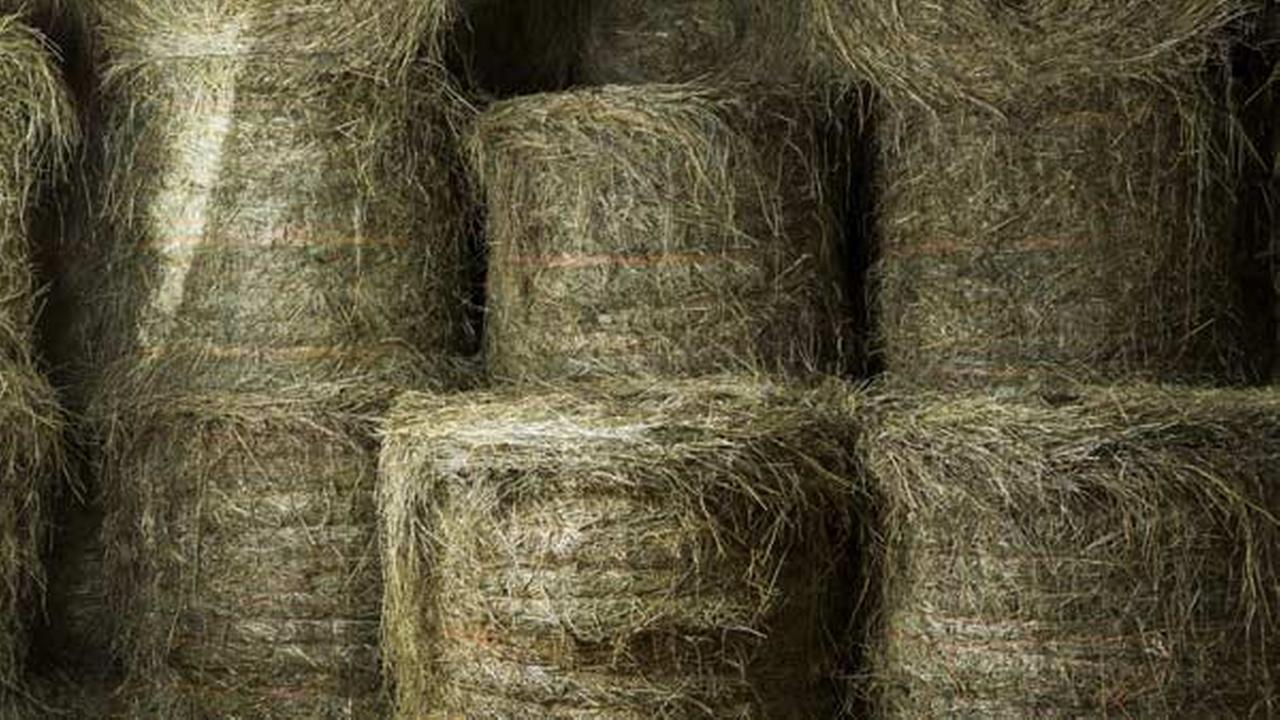11-year-old boy killed by falling hay bale in Lancaster, Pennsylvania