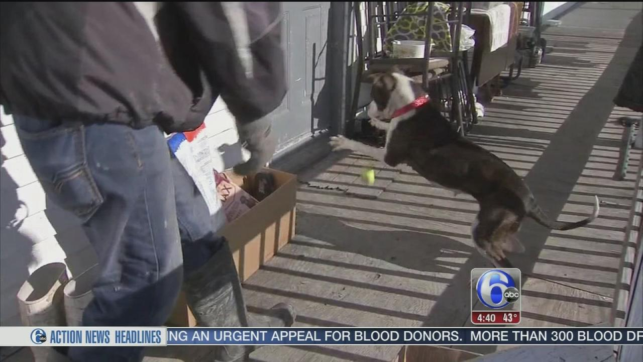 VIDEO: Red Paw Relief
