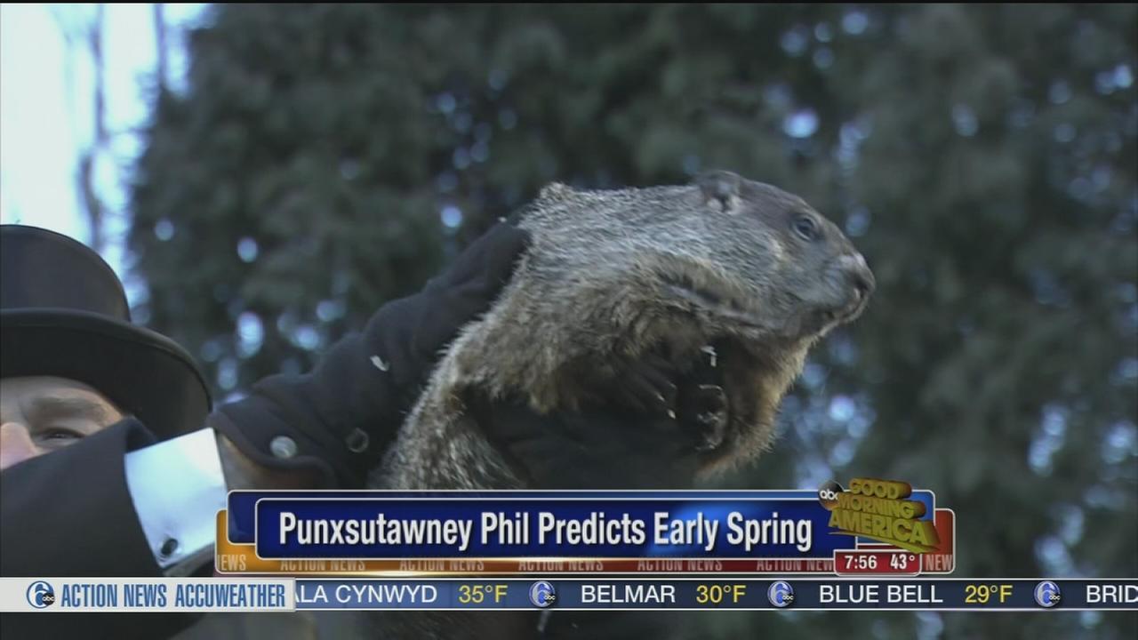 VIDEO: No shadow for Punxsutawney Phil