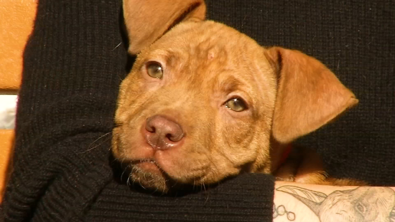 Shelter Me: Morris Animal Refuge. David Murphy reports during Action News at 9 a.m. on December 8, 2018.