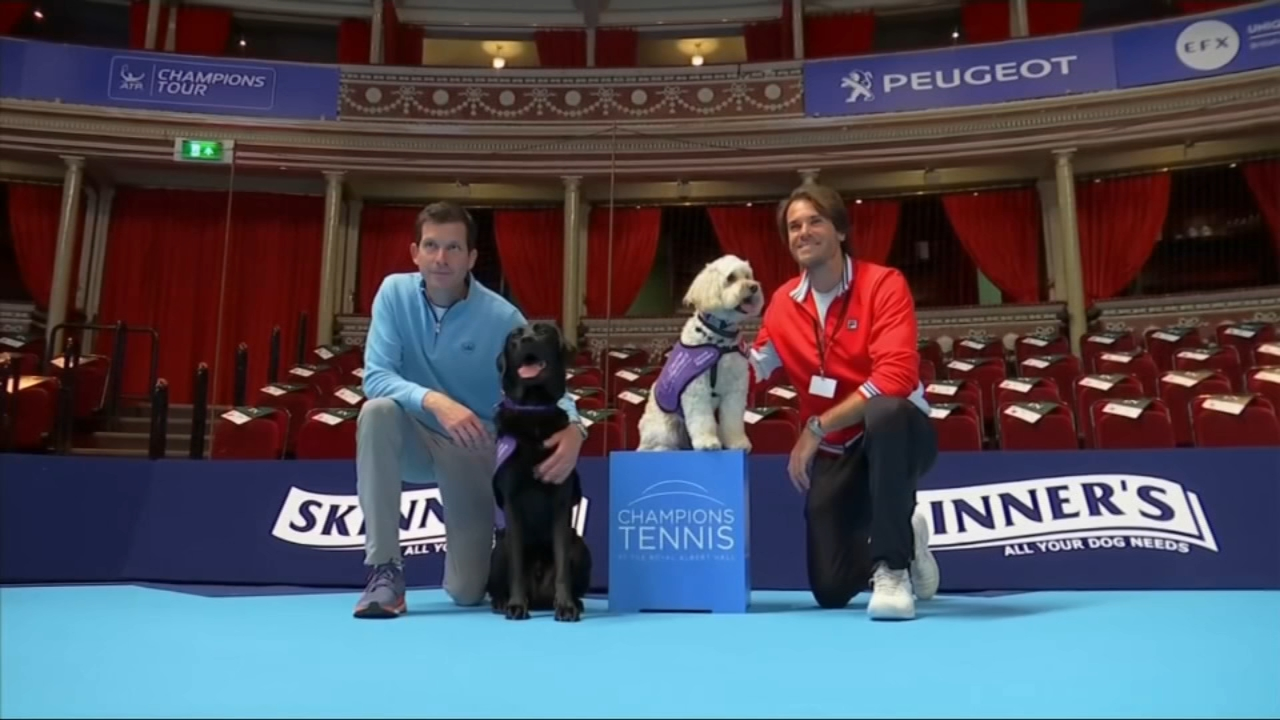 Royal Albert Hall to use dogs to retrieve tennis balls during matches. Christie Ileto reports during Action News at 7 a.m. on December 8, 2018.