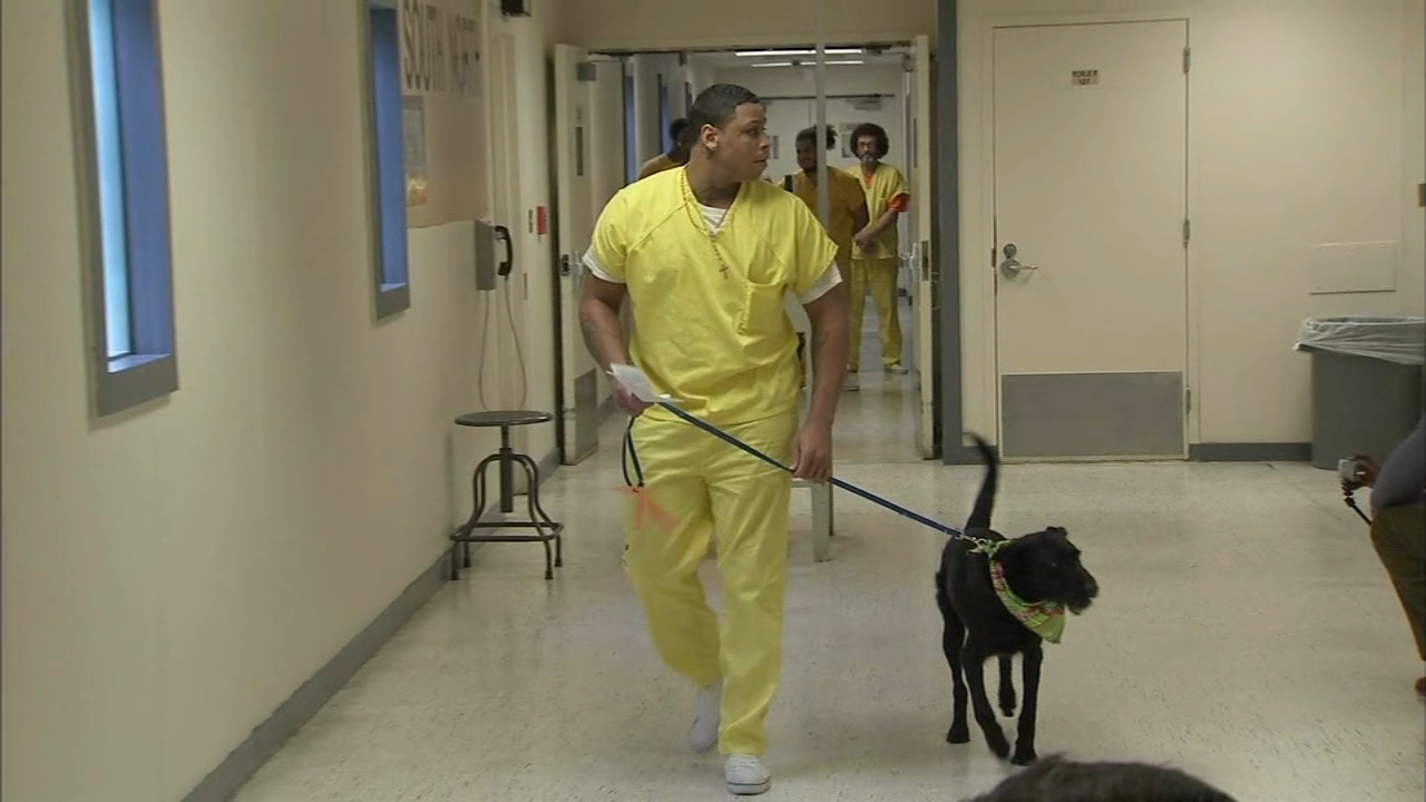 A first of its kind program in New Jersey is pairing shelter dogs with county inmates as reported during Action News at 4 on December 10, 2018.
