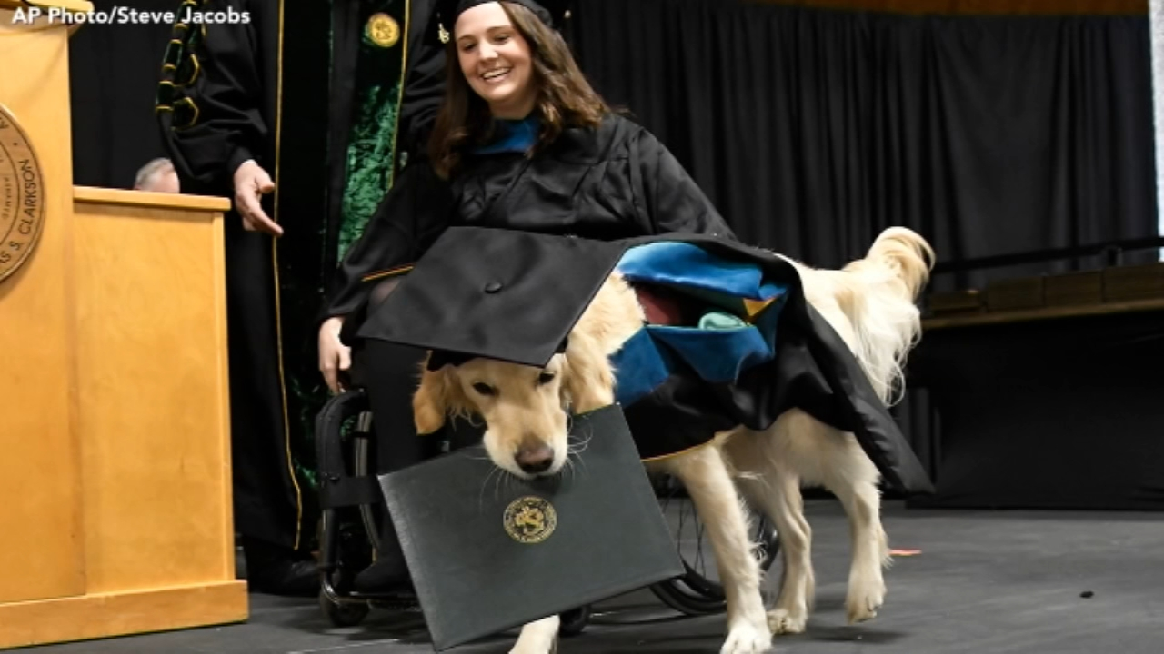 Service dog assisting college student gets honorary diploma from NY school. Watch the report from 6abc.com on December 18, 2018.