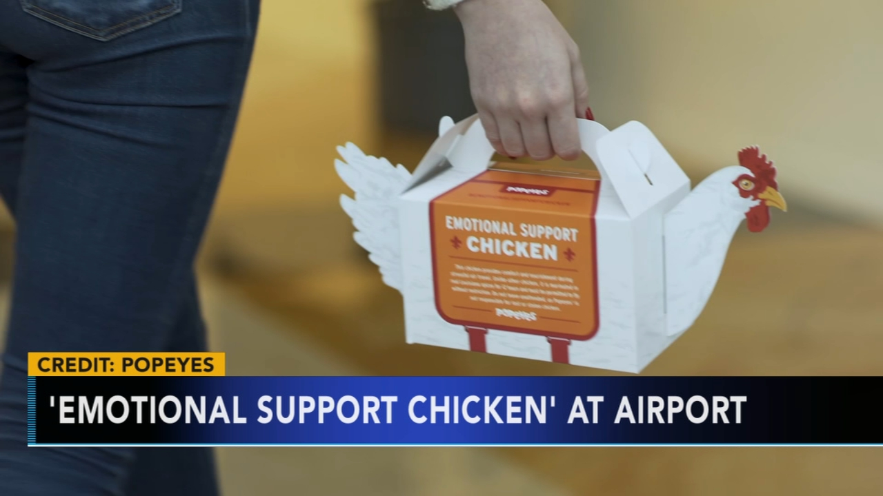Emotional support chicken available at Philadelphia airport. Tamala Edwards reports during Action News Mornings on December 19, 2018.