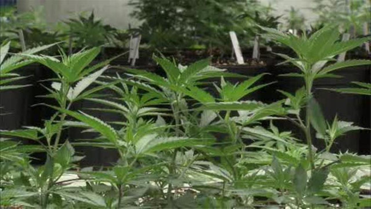 Delaware pot decriminalization set for House vote