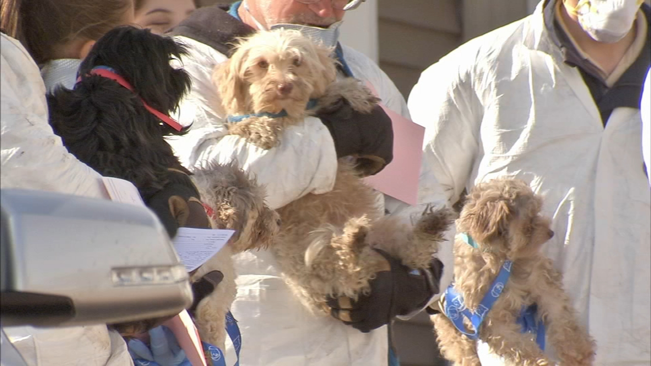 Woman faces additional charges for dogs found in Shamong Twp. home. Watch this report from Action News Mornings on December 28, 2018.