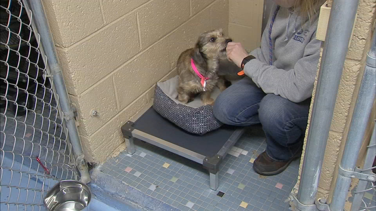 Shelter animals receive beds after community donations: Bob Brooks reports on Aciton News at 5 p.m., December 29, 2018