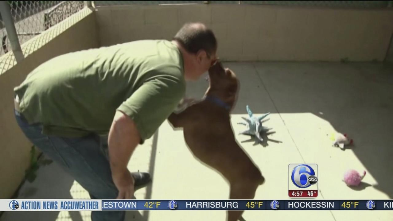 VIDEO: Dog returns home after two years