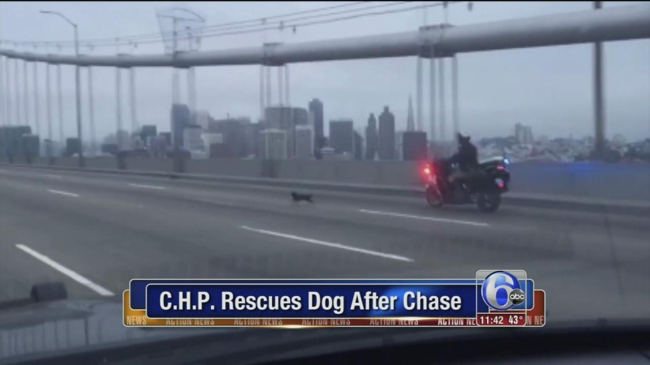 VIDEO: CHP dog rescue