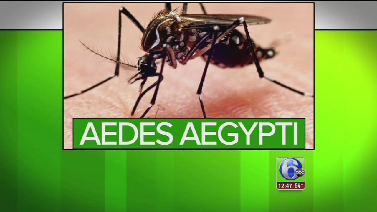 VIDEO: Best ways to protect yourself against Zika virus