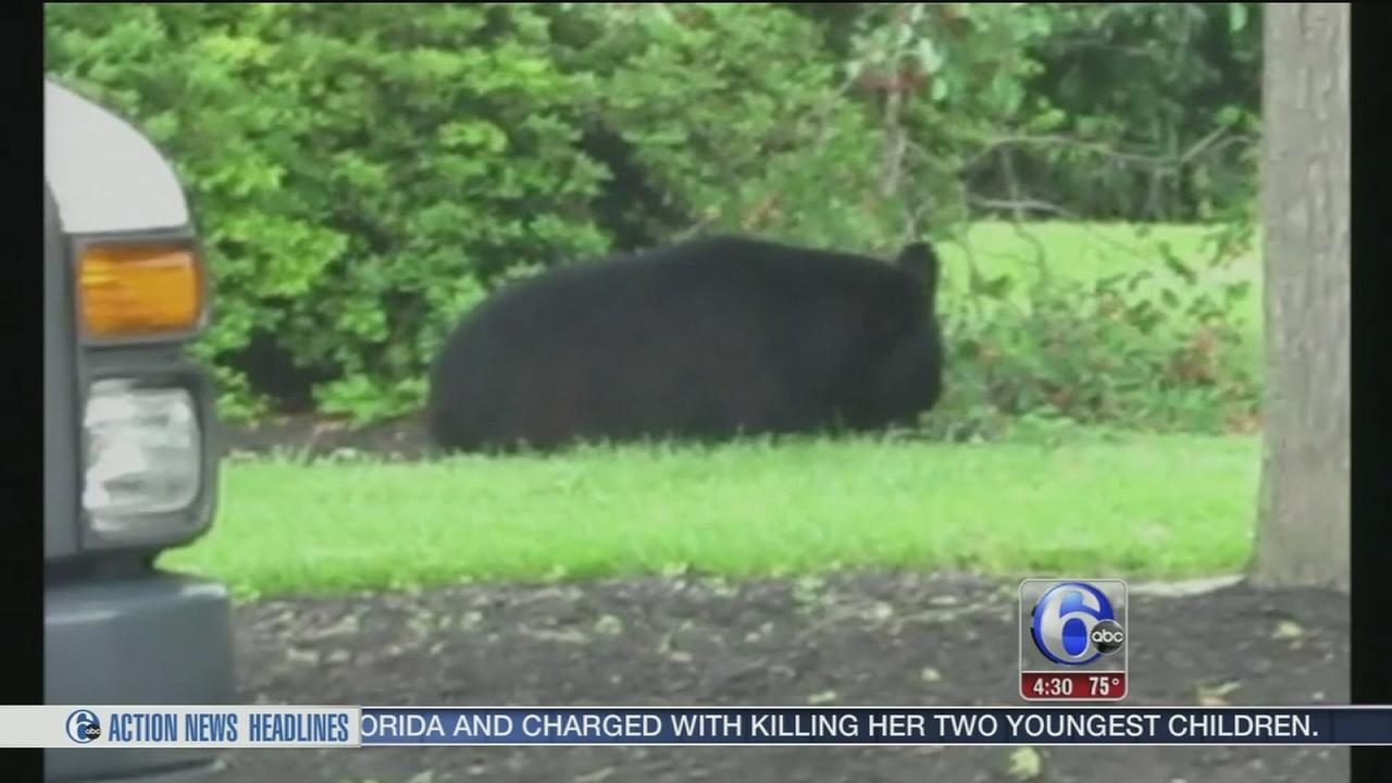 VIDEO: Bear spotted in Exton