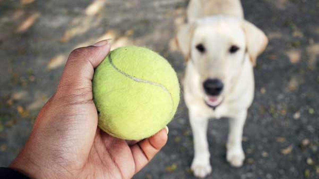 Police warn pet owners of tennis ball bombs