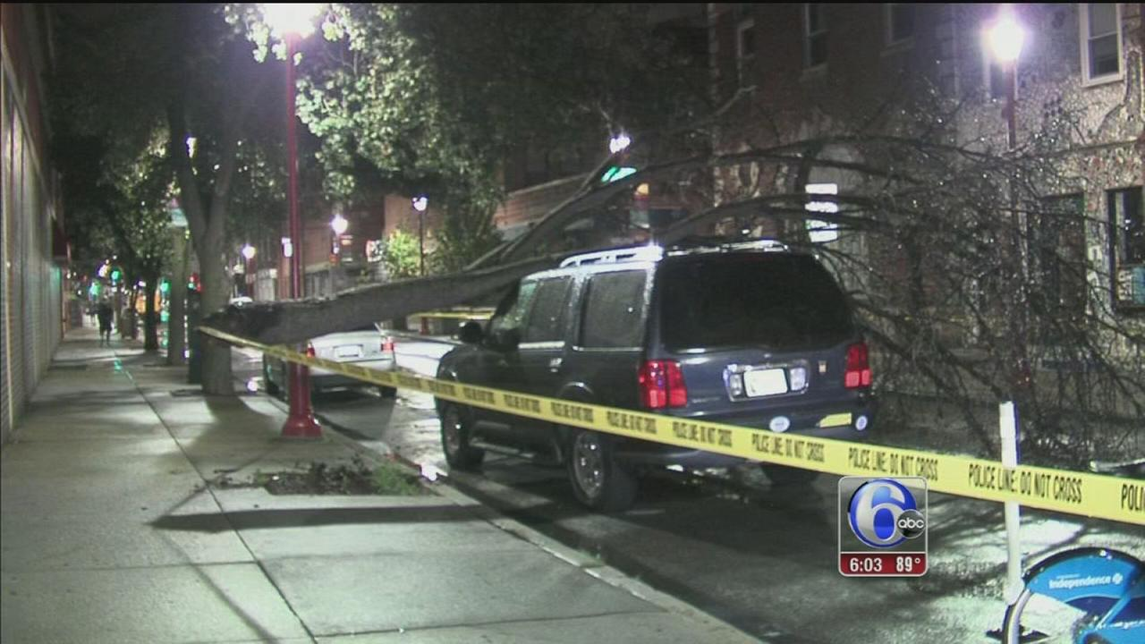 VIDEO: South St. tree